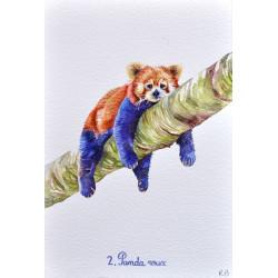 N°2. Le panda roux